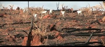 Cowspiracy - Das Geheimnis der Nachhaltigkeit -